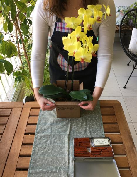 Orquídea amarela em um cachepô de papelão